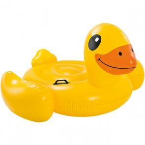 Schwimmtier, Ente